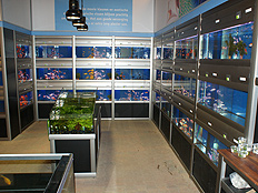 Fish presentation sales system for pet fish