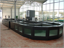 Fish storage tanks